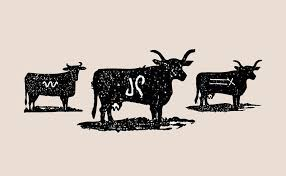 illustration of branding a cow